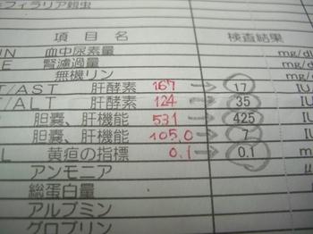 CIMG6961.JPG